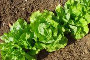 Co kryje się pod pojęciem żywność ekologiczna?