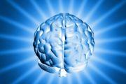 Za co odpowiadają poszczególne półkule mózgowe?