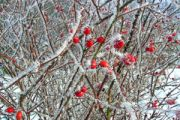 3 sposoby na rozgrzanie się zimą: czerwień, kasza jaglana i przyprawy.